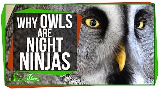 Download Why Owls Are Night Ninjas Video