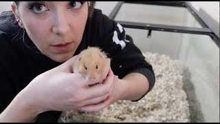 Download Giving My Hamster A Home Makeover Video