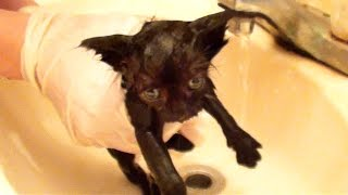 Download Tiny Kitten's First Bath Video