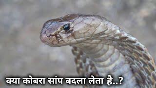 Download क्या सांप बदला ले सकता है.? जानने के लिए इस वीडियो को पूरा देखिए   Sarpmitra Akash Jadhav Ahmednagar Video