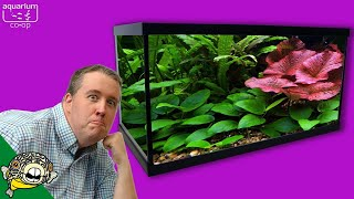 Download TOP 5 EASY LIVE AQUARIUM PLANTS Video