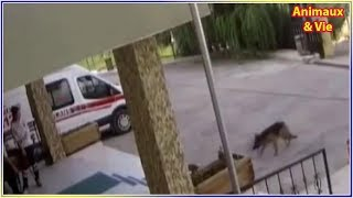 Download Ils voient un chien arriver aux urgences et n'en croient pas leurs yeux quand ils... Video
