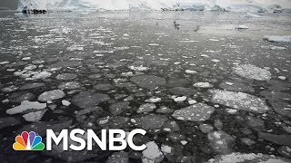 Download Climate Change Advocates Worry About Donald Trump | MSNBC Video