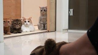 Download 어딜 가든 일곱 고양이들이 졸졸졸 따라다녀요 Video