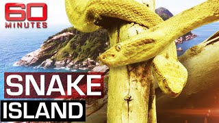 Download The deadliest place on earth: Snake Island | 60 Minutes Australia Video