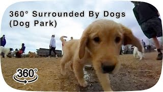 Download 360° Surrounded By Dogs (dog park) Video
