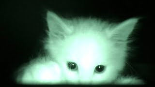 Download What Kittens Do At Night... Video