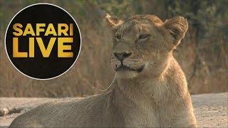 Download safariLIVE - Sunrise Safari - August 16, 2018 Video