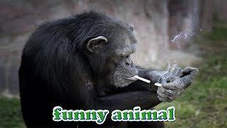 Download Những con khỉ bá đạo nhất - funny monkey Video