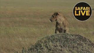 Download safariLIVE - Sunrise Safari - August 7, 2018 Video
