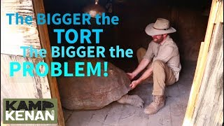 Download SAD Leg and Walking PROBLEMS for Aldabra Tortoise Video