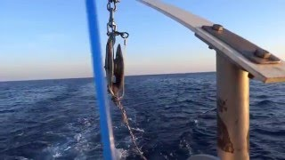 Download Explaining Greenstick Fishing Gear Video