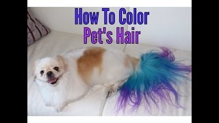 Download How to color dye your dog Video