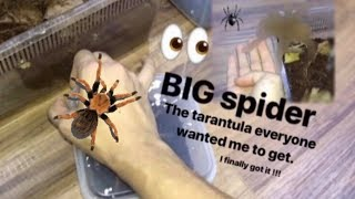 Download That TARANTULA everyone wanted me to get ~ I FINALLY GOT IT !!! Video