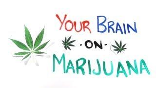 Download Your Brain on Drugs: Marijuana Video