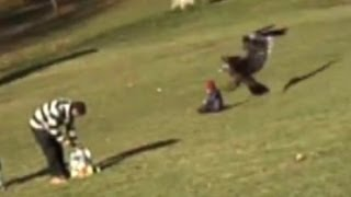 Download Golden eagle snatches child: Amazing video or elaborate fake? - Truthloader Video