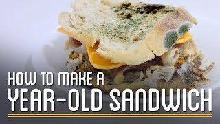 Download How to Make a Year-Old Edible Sandwich Video