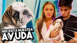 Download CARLOS ESTÁ ENFERMO *mi perro necesita ayuda* Video