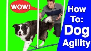Download An Introduction to Dog Agility! Video