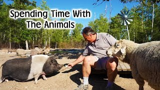 Download Spending Time with the Animals Video