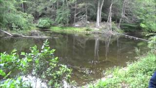 Download Fishing For Lunch With My Banggood Fishing Rod And Reel Video