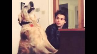 Download Bradley Will Simpson - Vine Video