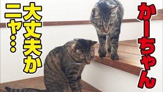 Download 母風邪を引くも猫さん達となんとか乗り切ろうと奮闘する父! Video