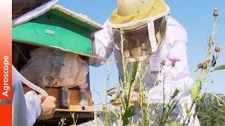 Download De nouvelles méthodes pour la protection des abeilles Video