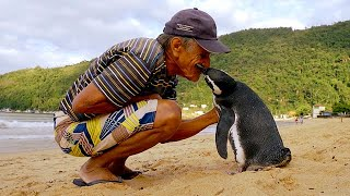 Download Jinjing The Penguin - Swims 5000 Miles Every Year To Visit The Man Who Saved Him Video