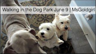 Download Walking in the Dog Park June 9   MsGoldgirl Video