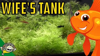 Download Trimming the 230 Gallon Planted Aquarium aka The Wife's Tank. Video