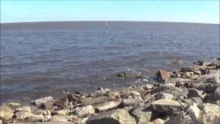 Download Louisiana. Fishing Lake Pontchartrain. A Limit Of Reds!!! Bonnet Carre Spillway. Third time out. Video