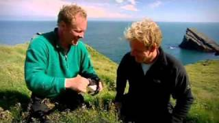 Download Gordon Ramsay Gets Bitten on the Nose by a Puffin - Gordon Ramsay Video