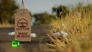 Download 100% Cotton. Made in India: Farmers commit suicide after planting GMO cotton. Video