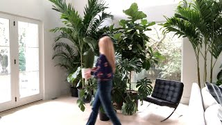 Download AMANDA TALKS TO PLANTS. See why houseplants are the best listeners Video