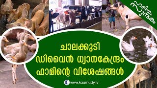Download Chalakkudi Divine Prayer Centre Farm | Haritham Sundaram EP 148 | Kaumudy TV Video