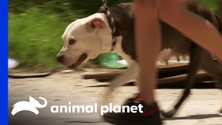 Download How to Get a Frightened Dog to Trust You Video