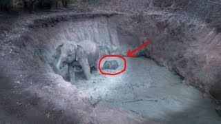 Download An elephant with her baby rescued from a well ! Video