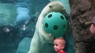 Download Anana makes her debut at the Cincinnati Zoo Video