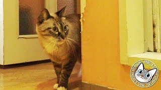 Download 【Jean & Pont 820】ジャン君の風呂待ちにポンちゃんも参入? 2017/11/22 保護猫育成記録 Jean & Pont Video