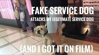 Download FAKE SERVICE DOG ATTACKS MY REAL SERVICE DOG ON FILM Video