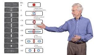 Download Thomas Pollard (Yale University) 3: The mechanics of cytokinesis Video
