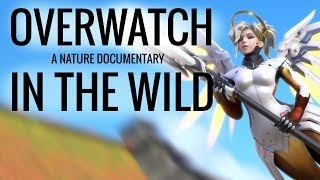 Download IF OVERWATCH WAS A NATURE DOCUMENTARY 2 Video
