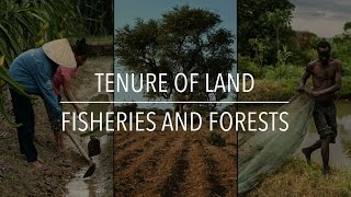 Download FAO Policy Series: Tenure of Land, Fisheries and Forests Video