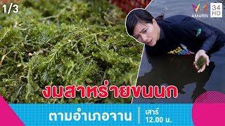 Download ตามอำเภอจาน   งมสาหร่ายขนนก บ้านท่าน้ำเค็มใต้ จ.สตูล   18 พ.ค.62 (1/3) Video