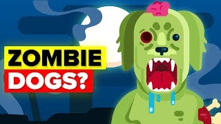 Download Why Did Scientists Create Zombie Dogs? Video