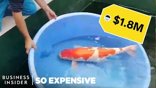 Download Why Koi Fish Are So Expensive Video