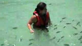 Download Baby shark attack Video