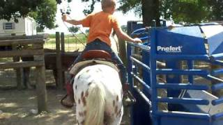 Download RANCH PONY IS SHOWING YOU HOW TO WORK TEAM ROPING CHUTE Video