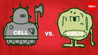 Download Cell vs. virus: A battle for health - Shannon Stiles Video